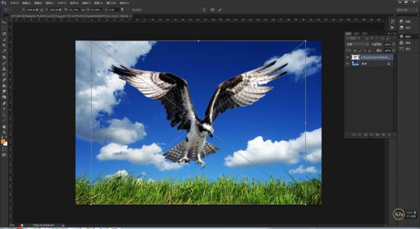 PS合成图片入门操作,用两张素材制作雄鹰翱翔效果