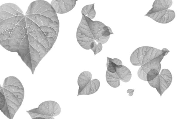 PS笔刷下载  简单的叶子、绿叶、树叶笔刷