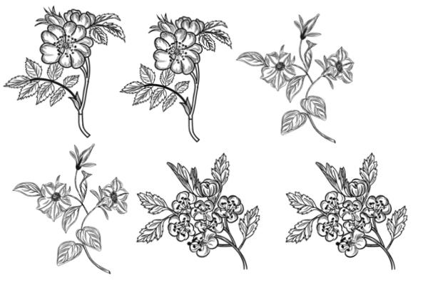 PS笔刷下载  写实的植物花卉图案、野草野花笔刷