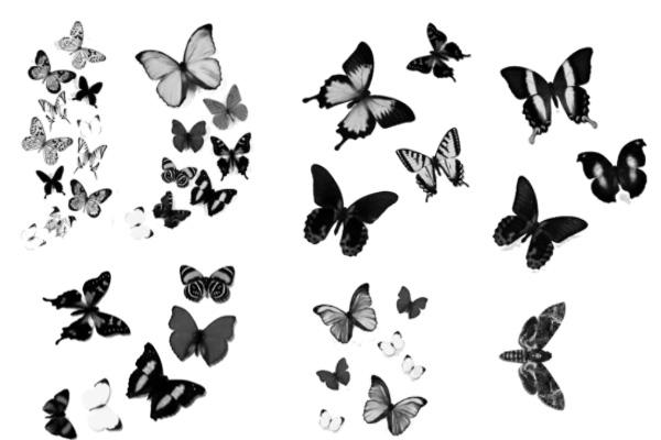 PS笔刷下载  各种蝴蝶图案笔刷