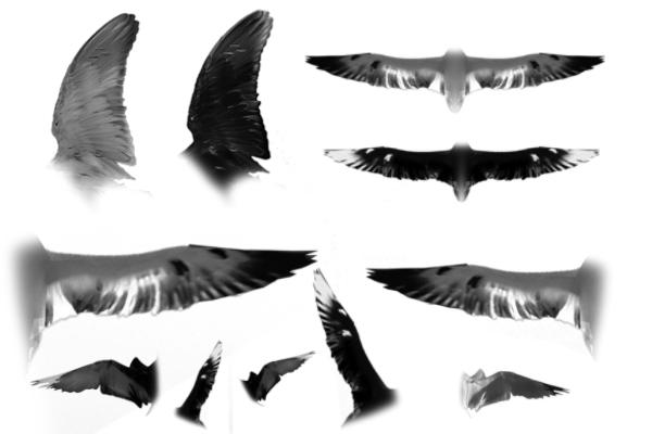 PS笔刷下载  天使翅膀、羽翼等图像笔刷