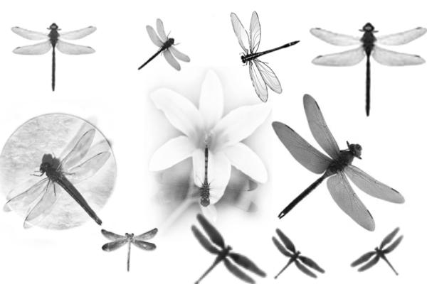 PS笔刷下载  蜻蜓昆虫造型笔刷