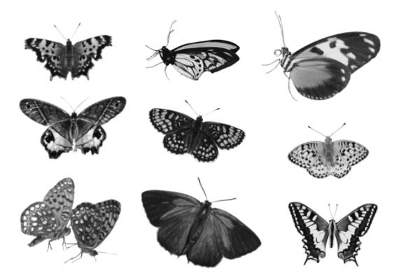 PS笔刷下载  蝴蝶图案花纹下载