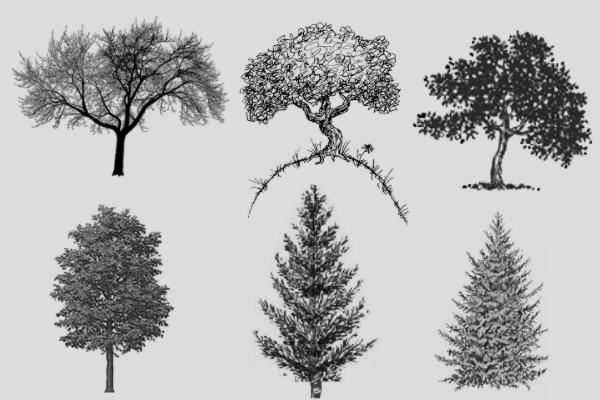 PS笔刷下载  大树剪影造型、素描式树木笔刷