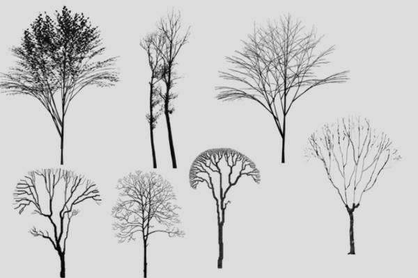 PS笔刷下载  森林树枝、大树剪影笔刷