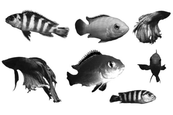 PS笔刷下载  金鱼、海洋生物、小丑鱼、鱼图案笔刷