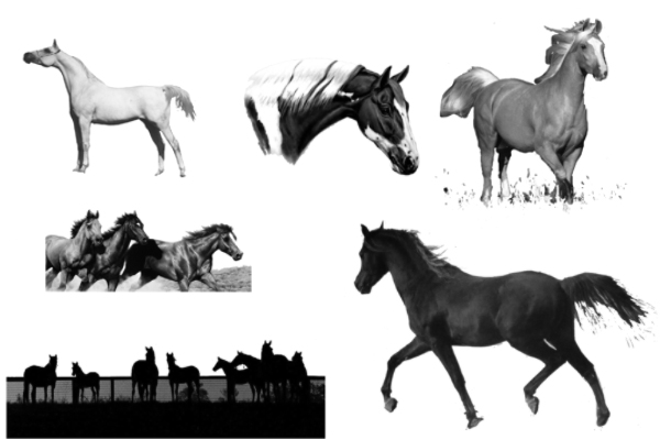 PS笔刷下载  骏马、马匹、动物马图案笔刷