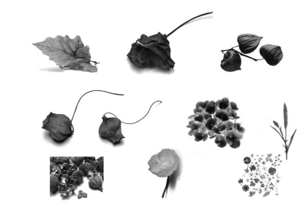 PS笔刷下载  植物叶子、花朵、嫩枝图案笔刷