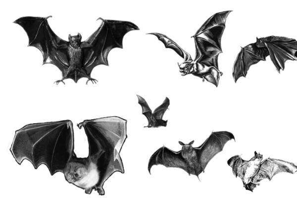 蝙蝠、魔鬼蝙蝠图案PS笔刷