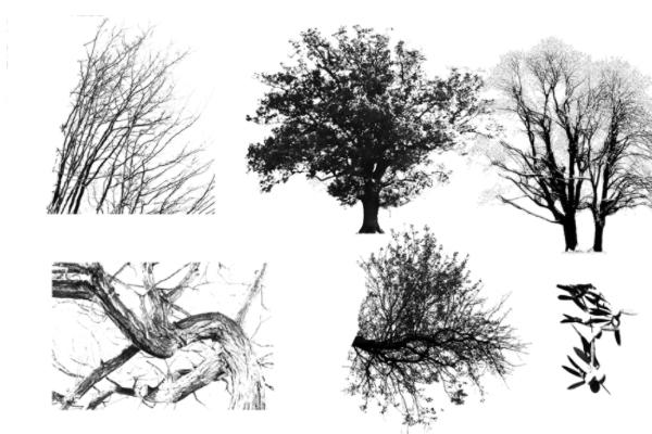 PS笔刷下载  大树、树木阴影、大树剪影笔刷