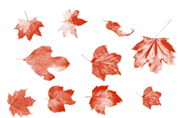 PS笔刷下载  秋天的树叶、落叶、枫叶笔刷