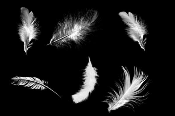 PS笔刷下载  羽毛、鸟毛图案素材