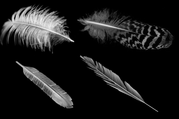 羽毛、鹅毛、纯洁羽毛笔刷下载
