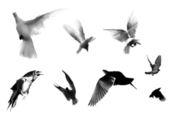 PS笔刷下载  飞翔的鸟类图案、飞鸟图像笔刷