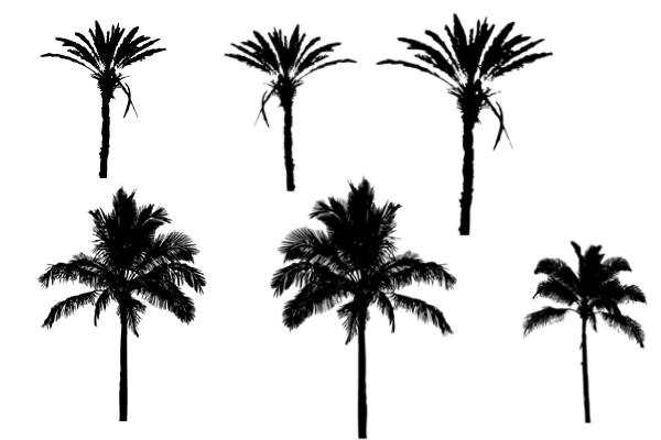 PS笔刷下载  棕榈树、椰子树等大树剪影笔刷