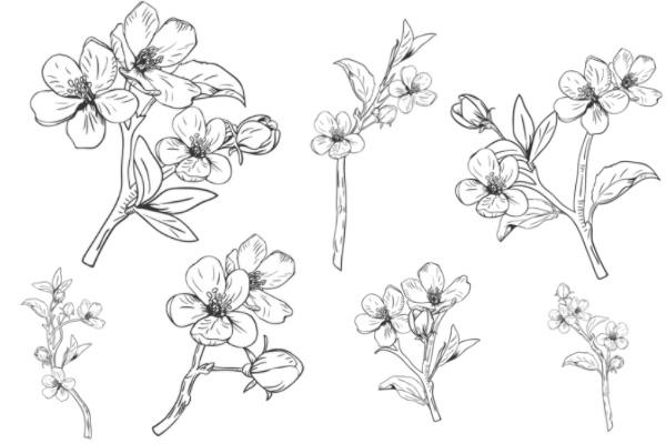 手绘漂亮桃花花纹、花束PS笔刷