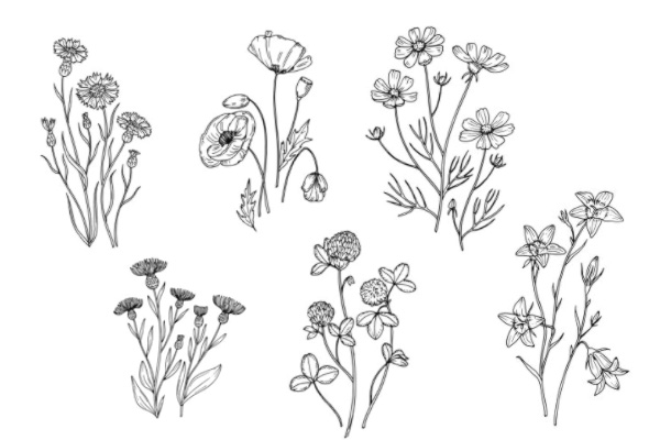 植物花纹图案、手绘鲜花花纹PS笔刷
