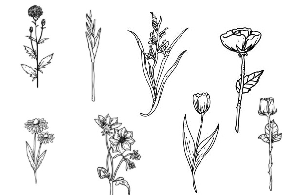 手绘鲜花图案PS笔刷