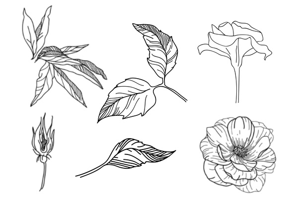 手绘玫瑰花、叶子图案PS笔刷