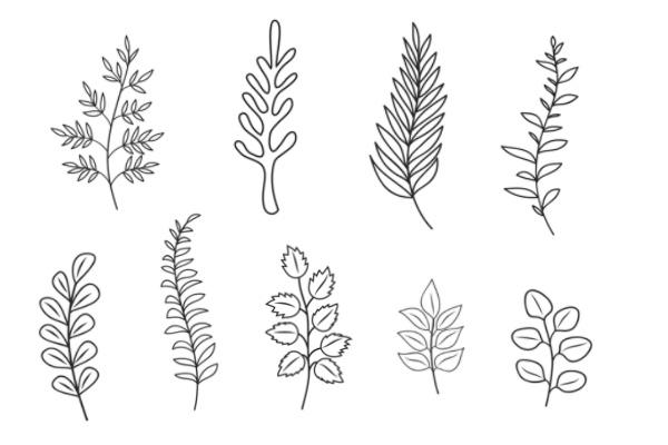 手绘植物叶子图案PS笔刷