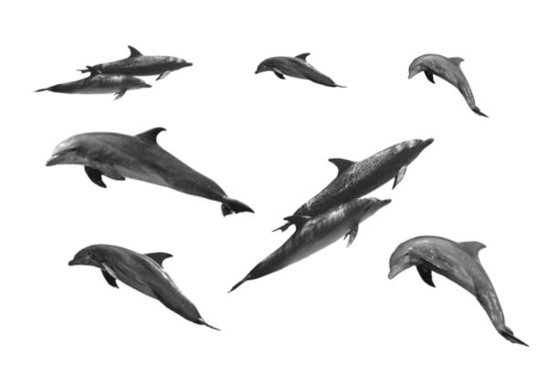 海豚生物图案PS笔刷