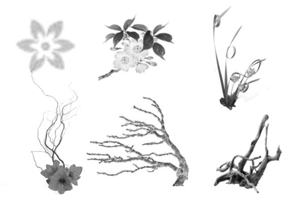 鲜花花朵图案PS笔刷素材