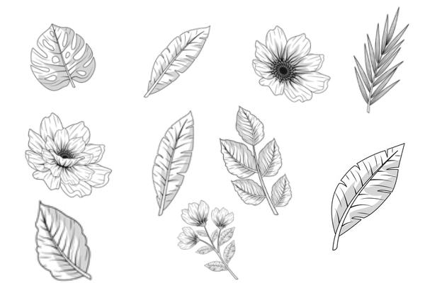 高品质手绘鲜花、花朵叶子PS笔刷