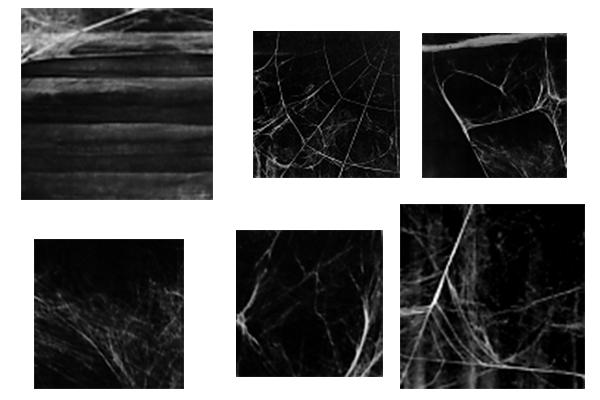 蜘蛛网纹理、蛛网背景PS笔刷