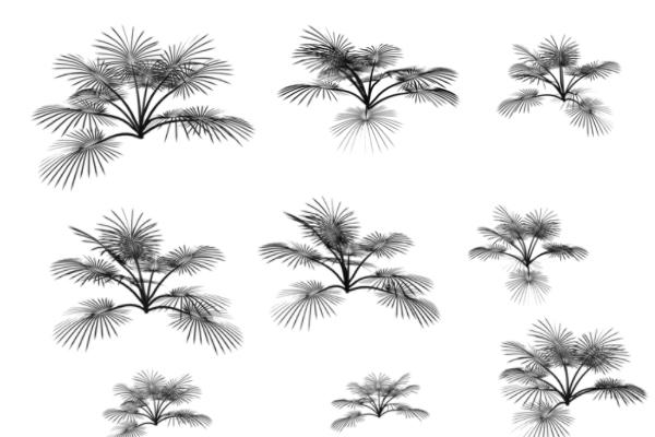植物松针叶PS笔刷